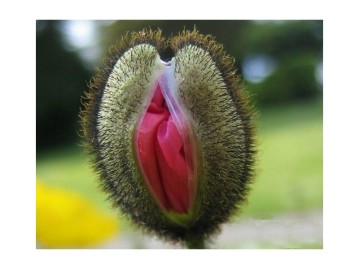vulvaplants